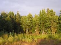 Tuluksak lightedforest