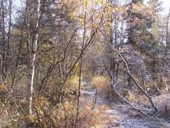 Tuluksak forest