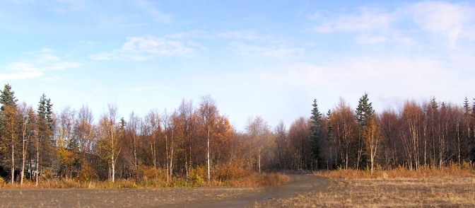 Tuluksak autumn forest