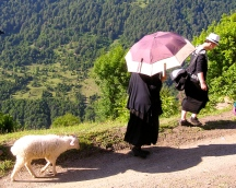 Woman leading a lamb