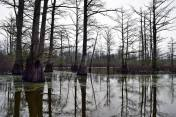 Desolate swamp