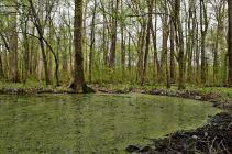 Cyprus Swamp